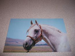 "1950s ""ALYF"" SIRE HORSE At KELLOGG UNIT, CAL POLY, POMONO CALIFORNIA VTG POSTCARD - Cavalli"