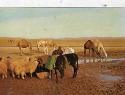 Ânes - Moutons - Dromadaires - Bergère ? - Désert De Judée ? - Près De La Source Dans Le Désert - Israël - Animaux & Faune