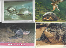 Lot De 15 Cartes Thème TORTUE - Toutes Scannées - Schildkröten