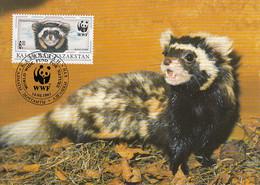 Kazakhstan 1997 Maxicard Sc #171 6te Marbled Polecat WWF - Kazajstán