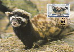 Kazakhstan 1997 Maxicard Sc #172 10te Marbled Polecat WWF - Kazajstán