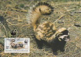 Kazakhstan 1997 Maxicard Sc #173 32te Marbled Polecat WWF - Kazajstán