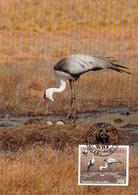 Malawi 1987 Maxicard Sc #496 20t Wattled Crane WWF - Malawi (1964-...)