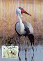Malawi 1987 Maxicard Sc #497 75t Wattled Crane WWF - Malawi (1964-...)