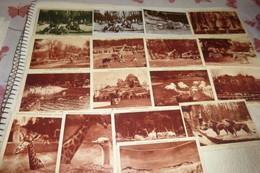 LOT DE 17 CARTES ANIMAUX AU PARC ZOOLOGIQUE..EXPOSITION COLONIALE INTERNATIONALE PARIS 1931 - 5 - 99 Cartoline