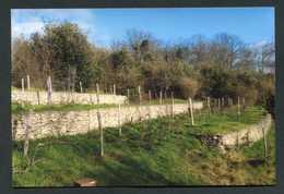 """Photo-carte """"Les Vignes à Fontenay-sous-Bois"""" Val-de-Marne - Fontenay Sous Bois"""