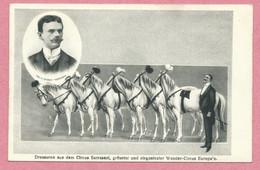Cirque - CIRCUS SARRASANI - Pferde - Horses - Chevaux - Dressage - Dresseur - Dressuren - Voir état - Circo