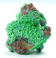 Conicalcite (Murcia, Spagna) - Lot. S358 - Minéraux