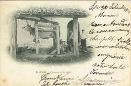 PYRENEES ATLANTIQUES 64.BIARRITZ FERRAGE D UN BOEUF - Biarritz