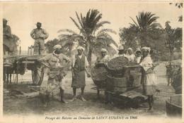 ORAN PESAGE DES RAISINS AU DOMAINE DE SAINT EUGENE EN 1909 - Unclassified