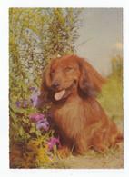 Postcard Teckel Dackel Dog Hund Chien Perro Cão Cao Germany Not Circulated - Hunde
