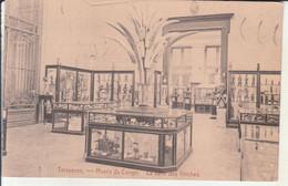 Tervueren - Musée Du Congo, La Salle Des Fétiches - Tervuren