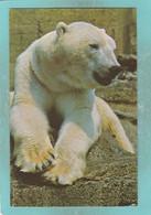 Small Postcard Of Bears,Polar Bear,London Zoo,V153. - Orsi