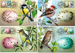 Belarus 2020 Set 4 MC  Maxicard  Eggs Of Birds Bird Les Oeux D'oiseaux Oiseau - Otros