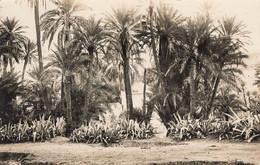 CARTE A IDENTIFIER - Palmiers - A Identificar
