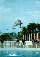 CPM - ANTIBES - MARINELAND - Les Dauphins … Edition Yvon - Other