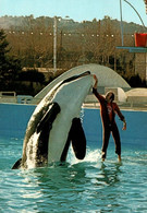 CPM - ANTIBES - MARINELAND - Attraction … Edition R.E.P. - Other