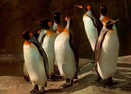 CPM - PARIS - Parc Zoologique - MANCHOTS ROYAUX - Edition Draeger - Other