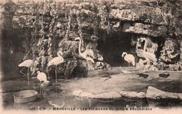 CPA - MARSEILLE - Les FLAMANDS Au JARDIN ZOOLOGIQUE - Edition L.P. - Birds