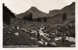 Carte Postale Ancienne - Circulé - Dép. 73 - ROSELEND - Troupeau à L' Abreuvoir - Non Classificati