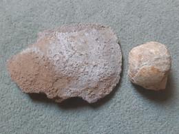 Tête De Fémur D'ours Des Cavernes (ursus Speleus), Grotte De Voidon à Grospierres (Ardèche) - Fossils