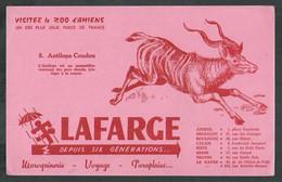 Buvard. Visitez Le Zoo D'Amiens (Somme) Antilope Coudou - Animals