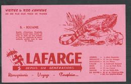 Buvard. Visitez Le Zoo D'Amiens (Somme) Iguane - Animals
