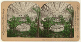 France ~ NICE ~ Winter Garden In Casino Municipal Tinted Stereoview 11765 21748 - Stereo-Photographie
