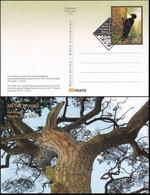 LETTLAND 2007 Postkarte - Postcard München Gestempelt - Lettonie