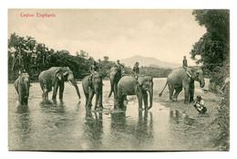 SRI-LANKA (Ceylon) Elephants - VG Ethnic Etc - Sri Lanka (Ceylon)