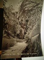 Cartolina Abetone Prov Pistoia Via Giardini Dopo La Nevicata - Pistoia