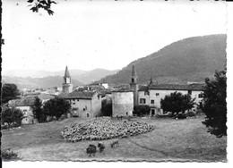 """BARGEMON  """"carte Photo Transhumance , Assez Rare """" N° 1347 - Bargemon"""