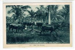 CPA NOUVELLES HEBRIDES - 128. BETAIL NEO HEBRIDAIS - Vanuatu