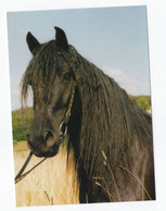 "Postcard Horse Mérens Merens ""Etendar De Calzan"" Head Bridle Pferd Kopf Cheval Caballo Cavalo Germany Not Circ. - Pferde"
