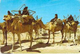 Mauritanie - Nomades à La Recherche D'un Nouveau Paturage - Mauritania