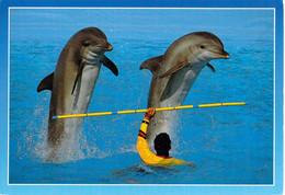06 - Antibes - Marineland - Les Dauphins - Antibes