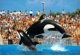 06 - Antibes - Marineland - Orques : Maman Sharkane Et Son Bébé (3ans) Shouka - Antibes