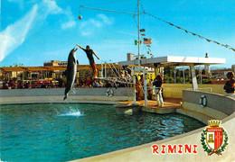 Rimini - Aquarium - Spectacle Des Dauphins - Rimini