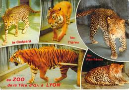 69 - Lyon - Zoo Du Parc De La Tête D'Or - Les Grands Félidés - Multivues - Lyon