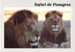 07 - Peaugres - Safari Parc - Les Lions - Frankrijk