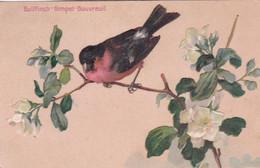 JOLIE CARTE GAUFFREE / BOUVREUIL / BULLFINCH / GIMPEL - Oiseaux