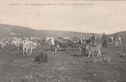 CPA (12) LAGUIOLE Vacherie Sur La Montagne Du Cayla Vache Bovin Vacher Paysan (2 Scans) - Laguiole