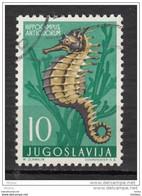 Yougoslavie, Jugoslavia, Poisson, Hippocampe, Cheval De Mer, Sea Horse, Hippocampus, Fish - Fische