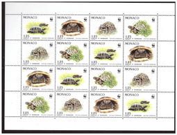 Bloc Tortues - Turtles