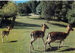 Stresa - Parc Zoologique Villa Pallavicino - Biches - Andere Steden