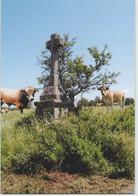 CPM 15 SAINT URCIZE ... La Croix Des Oiseaux (Livenais JE280716) Vaches - Other Municipalities