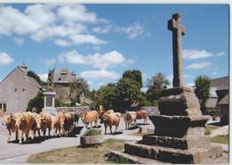 CPM 48 GRANDVALS ... La Place, Un Troupeau D'Aubrac (Livenais JE280716) Vaches - France