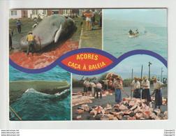 C.P.A  ACORES  --- CACA A BALEIA - Açores