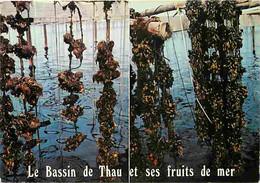 Metiers - Conchyliculture - Culture Coquillages Comestibles - Conchylicultureur - Meze Et Bouzigues Sur Le Bassin De Tha - Fischerei