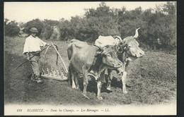 N°192 - Biarritz  - Dans Les Champs - Les Hersages -  Maca1652 - Biarritz